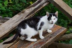 Запятнанный кот стоит на деревянной планке в траве и смотрит Стоковые Изображения RF