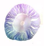 Запятнанный раздел гриба чернильного гриба Стоковое Изображение