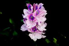 Запятнанный цветок для backround стоковое фото rf