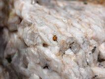2 запятнанный ladybug на кварце Стоковое Изображение RF