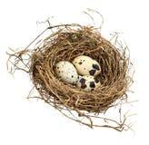 3 запятнанных яичка в гнезде сена Стоковые Изображения