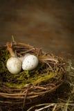2 запятнанных яичка в гнезде Стоковые Фотографии RF