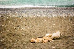 2 запятнали утомленную собаку отдыхают лежать на песчаном пляже морем Стоковые Изображения