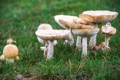 Заплата гриба Стоковые Изображения RF