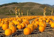 Заплата тыквы в Калифорнии. стоковые изображения