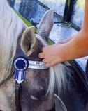 Заплетая грива лошадей стоковое фото