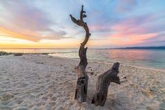Заплетенное дерево на пляже на заходе солнца Стоковые Изображения RF
