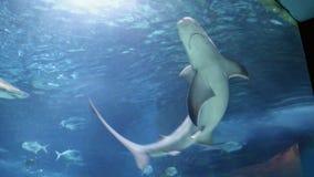 Заплывание акул и рыб сток-видео