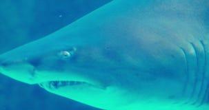 Заплывание акулы в садке для рыбы акции видеоматериалы