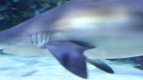 заплывание акулы подводное видеоматериал