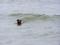 Заплывание дамы Стоковое Изображение RF