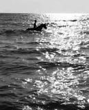 Заплывание девушки и лошади на море Стоковые Изображения