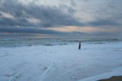 Заплывание захода солнца Стоковые Изображения RF