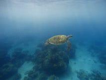Заплывание морской черепахи в открытом море с солнечным светом Темносинее море и животное Стоковые Изображения