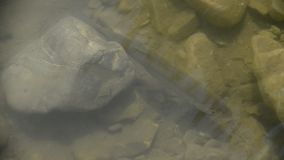Заплывание рыб в реке сток-видео