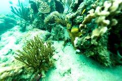 Заплывание рыб среди коралла Стоковые Изображения RF