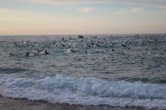 Заплывание тренировки спорта triathlete триатлона здоровое стоковое фото rf