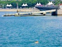 Заплывание человека в море Стоковое Изображение