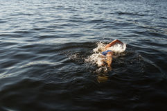 Заплывание человека Стоковое Изображение