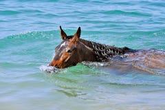 Заплывы лошади в море стоковая фотография rf