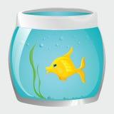 Заплывы рыб в банке иллюстрация штока