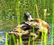 Заплыв лета Стоковое Фото