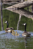 Заплыв семьи Стоковые Фото