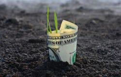 Заработок доллара растет от черной земли стоковое изображение