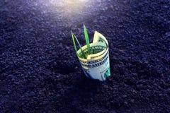 Заработок доллара растет от черной земли стоковая фотография