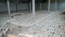Зараженная сумка гриба. Стоковое Изображение