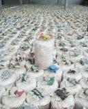 Зараженная сумка гриба. Стоковое Изображение RF