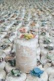 Зараженная сумка гриба. Стоковая Фотография RF