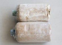 Зараженная сумка гриба Стоковые Фотографии RF