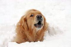 заразительные снежинки стоковые изображения rf