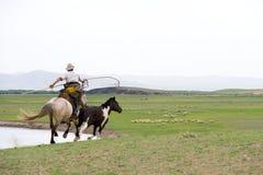 заразительный тип Монгол лошади Стоковое Изображение