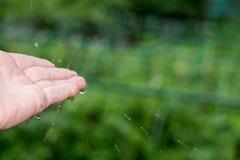 Заразительные падения дождя Стоковая Фотография RF