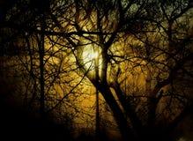 Зарево леса Стоковое фото RF