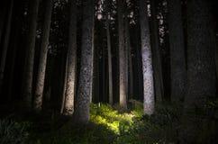 Зарево леса Стоковая Фотография