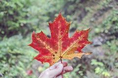 Заржаветые лист Стоковые Изображения