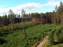 Заросшее лесом предгорье Стоковое Изображение