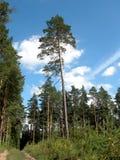 Заросшее лесом предгорье Стоковые Изображения RF