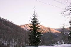 Заросшие лесом холмы в утре Стоковая Фотография RF