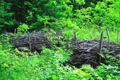 Заросль леса Стоковое Изображение RF