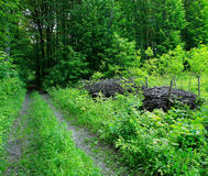 Заросль леса Стоковое фото RF