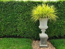 Засадите баки в саде, стены дерева в саде с в горшке заводом стоковое изображение