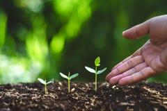 Засадите дерево моча дерево в природе стоковые изображения
