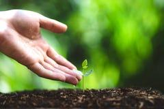 Засадите дерево моча дерево в природе стоковая фотография rf