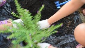 Засадите дерево видеоматериал
