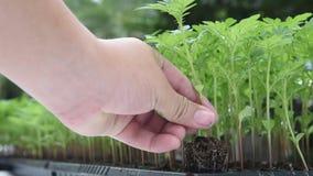 Засадите дерево акции видеоматериалы