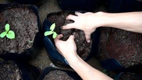 Засадите деревце в сумках урожая сток-видео